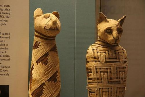 25 малоизвестных фактов. 25 любопытных и малоизвестных фактов о мумиях (25 фото)