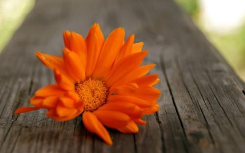 Кому идет оранжевый цвет в одежде. Оранжевый – цвет оптимизма